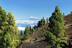 Przegląda od losu angeles Palma Teide na Tenerife zdjęcie royalty free