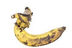 Przegniły banan na białym tle obraz royalty free