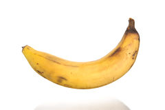 Przegniły banan odizolowywający na białym tle Zdjęcie Royalty Free