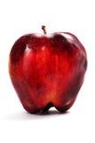 Przegniły jabłko fotografia royalty free