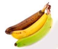 Przegniły koloru żółtego i zieleni banan odizolowywający na białym tle Zdjęcia Royalty Free
