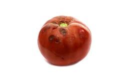 przegniły pomidor obraz stock