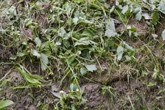 Przegniły trawa śmieci Obraz Stock