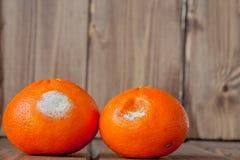 Przegni?e ple?niowe pomara?cze, tangerines na drewnianym tle Fotografia narastaj?ca foremka Karmowy kontaminowanie, z?y psuj? obr obrazy royalty free