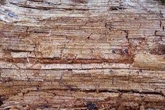 Przegni?y drewno Drewniana tekstura Las, natura zdjęcia stock