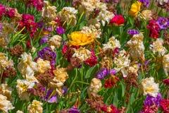 Przegnili kwiaty zdjęcie stock