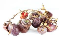 Przegniły winogrono Fotografia Stock