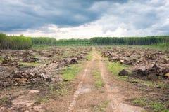 Przegrana ziemia dla nowego plantaci odradzania i sposobu pojęcia Po deszczowego dnia Obrazy Royalty Free
