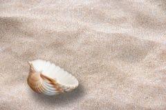 PRZEGRANY DENNY SHELL NA piasku zdjęcie royalty free