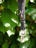 Przegrany psiego kołnierza pierścionku obwieszenie na drzewnym outside w świetle Obraz Stock