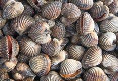 Przegrzebka owoce morza bakalie tak jak cockles Tajlandia zdjęcia stock