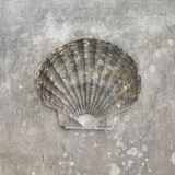 przegrzebka seashell royalty ilustracja