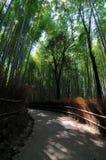 Przejście przy Arashiyama Bambusowym lasem w Japonia zdjęcia royalty free