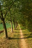 Przejścia prowadzenie drzewami obraz royalty free