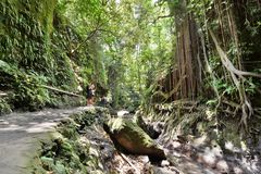 Przejście blisko świętej wiosny Małpia lasowa Padangtegal wioska Ubud bali Indonezja obrazy stock