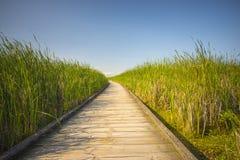 Przejście na zielonej wysokiej trawie obraz stock