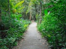 Przejście pasa ruchu ścieżka Z Zielonymi drzewami w Lasowej Pięknej alei, droga w parku w Thailand Zdjęcie Royalty Free