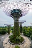 Przejście przy Supertree gajem przy ogródami zatoką w Singapur zdjęcia royalty free
