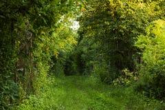 Przejście w lato lesie zdjęcie stock