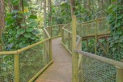 Przejście w parku Guadeloupe Zdjęcie Stock