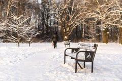 Przejście z ławkami w zima parku Obraz Royalty Free