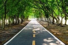 Przejścia i drzewa w parku Fotografia Royalty Free