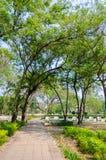Przejście w parku z drzewem jest jak tunel Zdjęcie Stock
