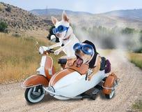przejażdżki hulajnoga zdjęcie royalty free