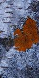 przejazd tła zimy śniegu Zdjęcia Royalty Free