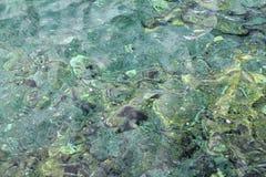 przejrzysty kolorowy zielony skalisty denny brzeg zdjęcie stock