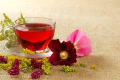 Przejrzysty szklany kubek z czerwoną kwiecistą herbatą Obraz Stock