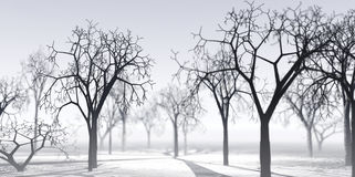Przejrzysty zimy powietrze Zdjęcie Stock