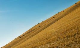Przekątna Tuscany Obraz Royalty Free