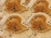 Przekrój poprzeczny drewniany tło Zdjęcie Royalty Free