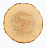 przekrój poprzeczny drewno obrazy stock