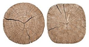 Przekrój poprzeczny drzewny bagażnik obraz stock