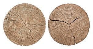 Przekrój poprzeczny drzewny bagażnik zdjęcia royalty free