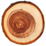 Przekrój poprzeczny drzewny bagażnik Obrazy Stock