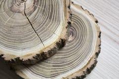 Przekrój poprzeczny drzewo Zdjęcia Royalty Free