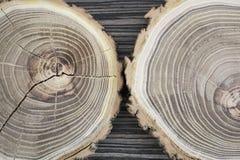 Przekrój poprzeczny drzewo Obrazy Stock