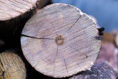 Przekrój poprzeczny drzewo makro- Zdjęcie Royalty Free