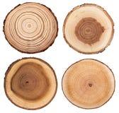 Przekrój poprzeczny pokazuje wzrostowych pierścionki drzewny bagażnik ustawia odosobnionego na białym tle zdjęcie stock