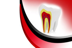 Przekrój poprzeczny zęby Fotografia Royalty Free