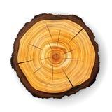 Przekroju Poprzecznego fiszorka Drzewny Drewniany wektor Round cięcie z rocznymi pierścionkami royalty ilustracja