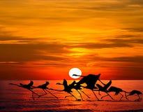 przekrwienia flaminga flamingi target727_1_ jezioro Obrazy Royalty Free
