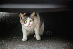 Przelękły kot na bruku pod samochodowym zderzakiem obrazy stock