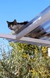 Przelękły kot na dachu zdjęcia stock
