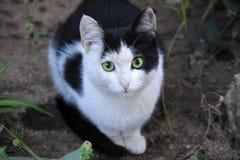 Przelękły mały czarny i biały kot obrazy royalty free