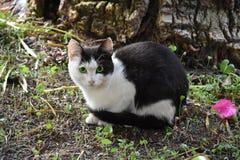 Przelękły mały czarny i biały kot obraz stock