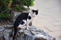 Przelękły mały czarny i biały kot zdjęcia royalty free